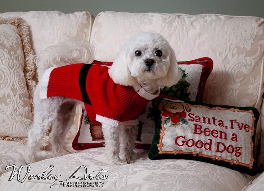 Good Dog pillow Santa