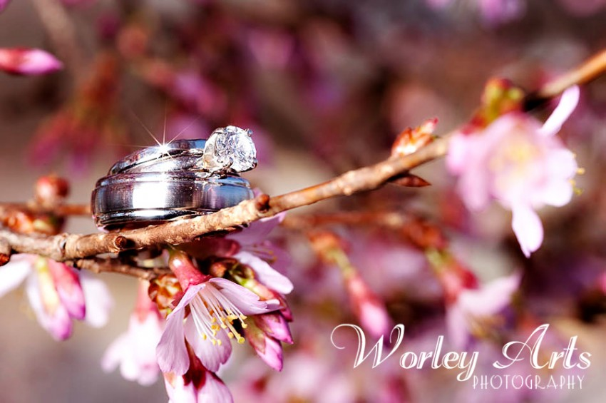 wedding rings on cherry tree